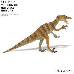 Dinosaur Velociraptor Carnagie Collection   Buy $50 plus, get FREE