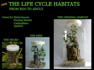 PRAYING MANTIS/STICK INSECT/SPIDER/​LIFE CYCLE HABITAT SET