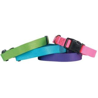 Dog Collar Brite Nylon Adjustable Guardian Gear Dog Collars