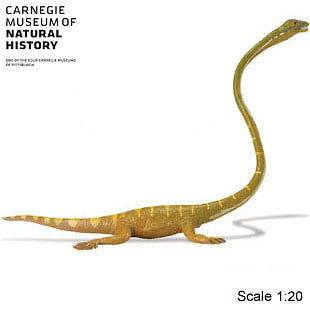 Dinosaur Tanystropheus Carnagie Collection   Buy $50 plus, get FREE