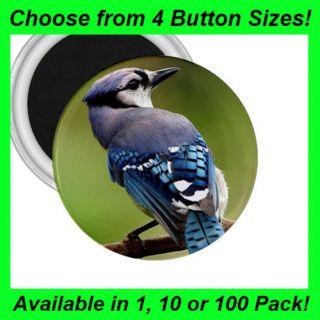Blue Jay Bird   Button/Badge   Fridge Magnet  MM1050