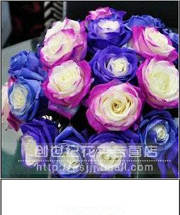 Rose Seeds Blue Red Purple Pink Black Rainbow Petal Plants Home Garden