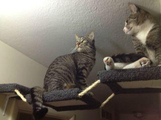cat tree, perch, shelf, scratching post, cat tower
