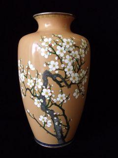 1890s 1910s MEIJI ANTIQUE JAPANESE CLOISONNE VASE   CHERRY BLOSSOM