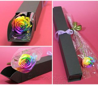 Rose Seed ★ 100 Rare Holland Rainbow Rose Seed China Lover Flower