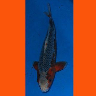fish tank in Tropical Fish