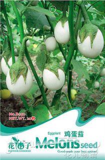 Eggplant Seed ★ 20 Eggplant Vegetables Seed Tender and Juicy