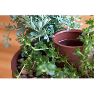 SELF WATERING PLANTER  easy garden, low maintenance  UncommonGoods