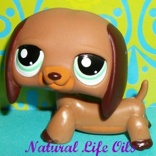 Littlest Pet Shop~#1950 COCOA BROWN DACHSHUND PUPPY/WEINER DOG~S158