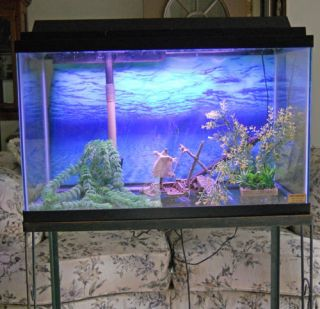 29 Gallon Tall Aquarium Fish Tank Heater Filter Light and Hood NW Ind