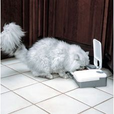 PetSafe 2 Meal Automatic Pet Feeder for Dogs Cats