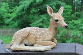 Baby Deer Fawn Buck Doe Unborn with Spots Taxidermy Mount