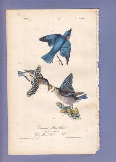 Audubon Birds of America Print First Edition 1840 Common Blue Bird 134