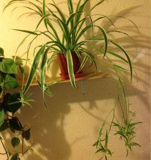 Plant Wow Amazing House Plants 99p Wow Tropical Bonanza LIVE Fast
