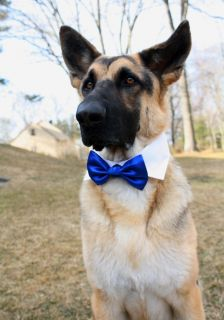 Boy Dogs Cats Shirt Collar Adjustable Costume Wedding Formal for Bow