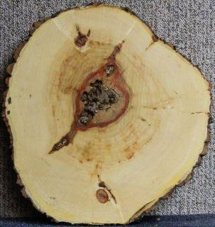 Red Flame Box Elder Wood Log Slice End Coffee Table Top Lumber Slab