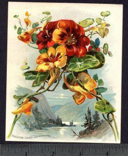1895 © Buffalo Bill Shadow Card Woolson Spice Lion Coffee Advertising