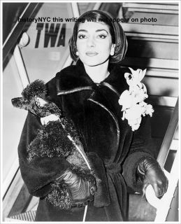 1958 Maria Callas Movie Star Poodle TWA Airport Photo