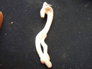HAND CARVED FAUX IVORY BONE PENDANT COBRA WITH SILVER HOOP ATTACHED NO