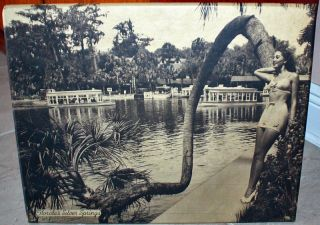 1940s Pin Up Girl Bathing Beauty Florida Silver Springs Display Wall