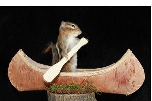 SUPER CUTE CHIPMUNK IN CANOE ** TAXIDERMY MOUNT TRAP SQUIRREL FISHING