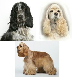 Cocker Spaniel Dogs Removable Vinyl Decal in 3 Choices for Windows