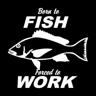 Born to Fish Vinyl Window Decal Funny Bumper Sticker