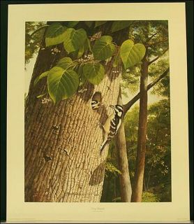 Ray Harm Downey Woodpecker 24x20 Signed Limited Edition Print Never
