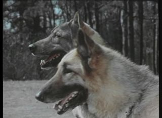 Military Dog Scout Dog Training K9 Film Collection DVD