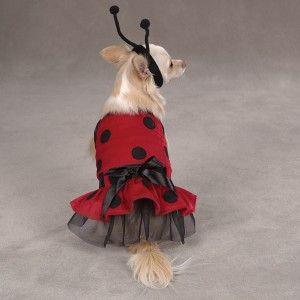 Dog Lady Bug Canine Pup Halloween Costume Ladybug XS L