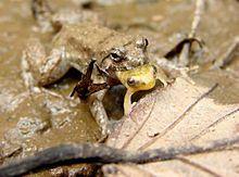 Frog Prince Amphibian Toad Silver Pendants Charms Lot