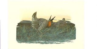 five bird postcards. Images are by Richard Sloan from the Griggsville