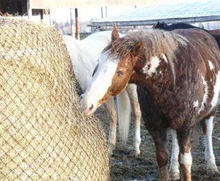 Large Mesh Hay Net Feeder Regular Round Bale 1 5