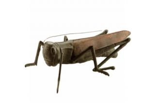 Large Cast Iron Garden Cricket Grasshopper Statue