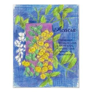 colored pencil floriography drawing of Acacia with meanings of the