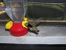 Hummingbird Flower Gold Brass Pendant Charm Jewelry Estate Sale