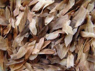 Plumeria Seeds/Flowers/PoungChompoo/Fresh 30seeds