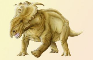The extinct, heavily armored and horned dinosaur Pachyrhinosaurus, a
