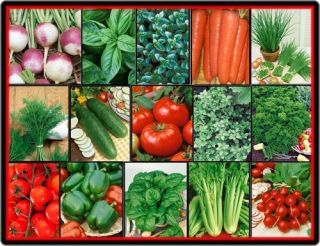 Vegetable Herb Garden Lot Over 2 570 Fresh Seeds 15 Varieties Non GMO