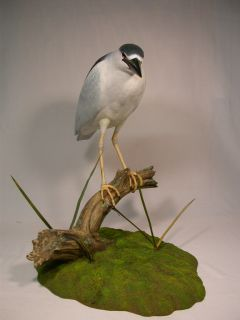 Lifesize Black Crowned Night Heron Orig Carving Birdhug
