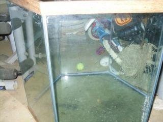 55 gallon undergravel fish tank aquarium filter 48x12 for 55 gallon hexagon fish tank