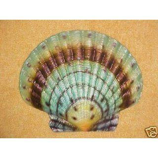 Seashell Multi color Wall Decor Spa Tropical Fish Bath