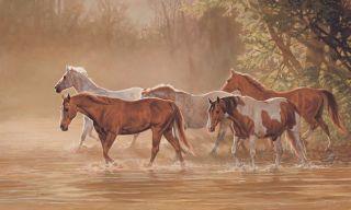 Running Horses Stream Wallpaper Wall Decor Mural 9x15 WL5528MMP