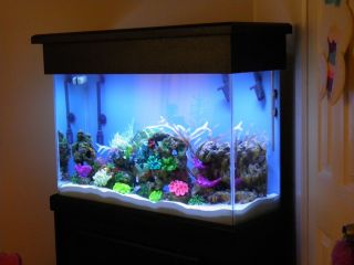 50 Gal Tall Fish Tank On Popscreen