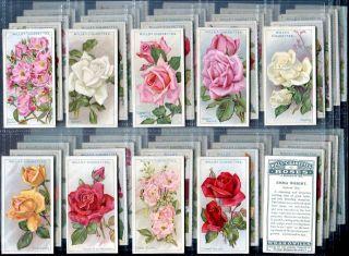 Tobacco Card Set WD HO Wills Roses Garden Rose Types 1926