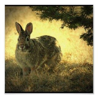 Impresión salvaje del poster del conejo de