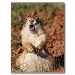 White tailed Prairie Dog Jim Brown Postcard