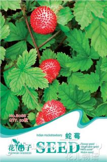 Seeds Red Indian Mock Strawberry Seeds Organic Delicious Food