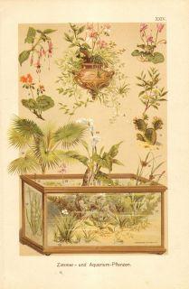 1901 Indoor Plants and Aquarium Plants Antique Chromolithograph to