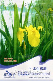 Bag 5 Seeds Flower Yellow Iris Water Plant Bulb H001